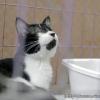 하노이, '애완동물 구조센터' 방문기..., 길 잃은 고양이들의 안식처