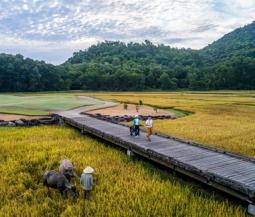 자연과 조화이룬 '라구나 골프 랑코'.., 골프장 바로 옆에서 쌀농사