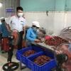 베트남서 고춧가루·말린고추 36% 발암물질 기준치 초과