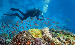 포브스: 베트남 중부 최고의 스쿠버 다이빙 추천지 '고래섬'