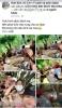 베트남, 사회적 거리두기 피해 숲에서 술 파티 했다 벌금 1,000만원