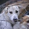 베트남 동물보호법 개정 시행령.., 동물 학대에 벌금 300만동 등