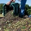 세계 2위 커피생산 대국 베트남이 올라 선 이유는