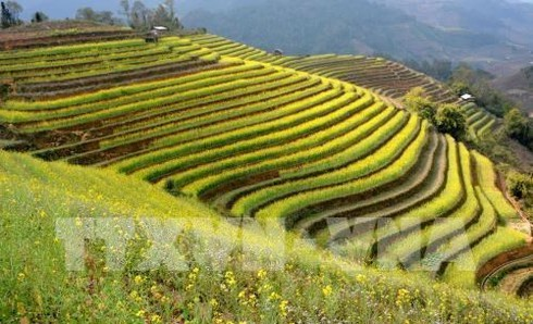 mu_cang_chai_terraced_fields_JWEV.jpg