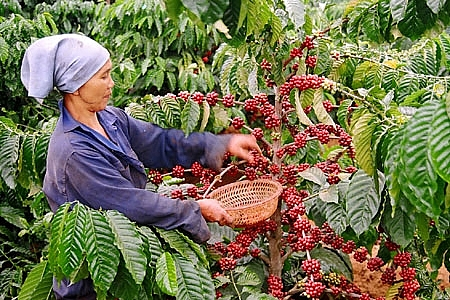 vietnam-coffee-day-2018-substainable-vietnam-coffee-development.jpg