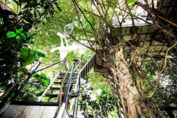 하노이의 숨겨진 매력 '정글 트리 하우스' 홈스테이