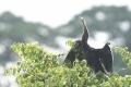동나이省, 멸종위기 희귀 조류 뱀목가마우지 무리 발견