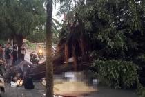 하노이, 태풍 영향권 폭우.., 쓰러진 가로수에 1명 사망
