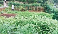 하노이, 유기농 채소 텃밭과 주말 농장 인기.., 생태관광 및 오두막도 관심