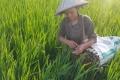 생생 베트남 : 플라스틱 파이프 이용해 미꾸라지 잡는 법