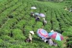 타이응옌省, '한마을 한품목(OCOP) 박람회' 8/31일부터 개최