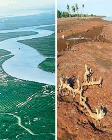 강물 급감… 신음하는 메콩강