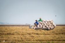 베트남, 쌀 수출 재개.., 이번달 40만톤 수출 허가