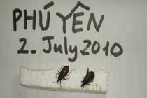베트남, 여름철 벌레 조심하세요..