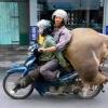 베트남에서 오토바이의 역할