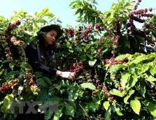 호치민市, '제 3회 커피 엑스포 2018' 11월 1일부터