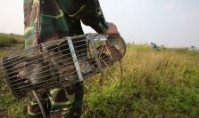 베트남 박쥐 농장, 들쥐 거래소 등에서 코로나바이러스 전염 위험성 높아