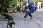 호치민市, 중심부에서 '깨끗한 거리' 위해 목줄없이 활보하는 '개' 단속
