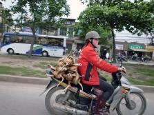 베트남에서는 아주 자연스런 광경입니다.