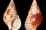 베트남, 알려지지 않은 바다 골뱅이 먹은 여성 4시간 후 '사망'