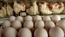 베트남 계란은 과연 안전한 걸까?