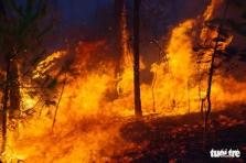 응에안성, 대형 산불로 약 50헥타 이상 숲 파괴
