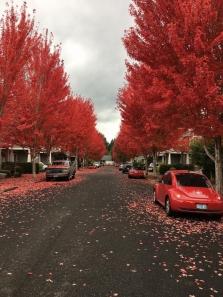 강력한 가을의 정취
