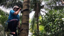 베트남에서 개발된 코코넛 나무 오르는 장치