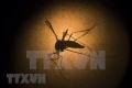 동나이省에서 올해 첫 뎅기열 사망자 발생.., 모기 주의 필요