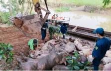 베트남, 돼지고기 가격 급증하자 캄보디아에서 밀수 증가