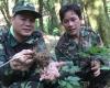 베트남, 중부지역에서 유명한 응옥링山에서 자란 장뇌삼 '인기'