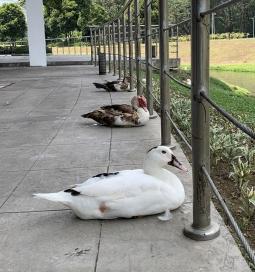 동물들도 민감하게 지키는 코로나19 사회적 거리두기