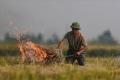 하노이, 최근 심해지는 대기오염에 수확 후 볏짚 태운 연기도 한 몫?