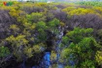황홀한 풍경 연출하는 중부 지역의 가을 맹그로브 숲