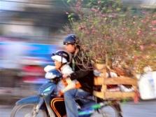 하노이의 구정(Tat) 꽃 시장 풍경