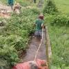 베트남, 아프리카 돼지 열병 확산 중.., 돼지 사체 무차별 투기도