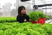 대학 졸업 후 귀향해 채소 수경 재배하는 여성.., 안전한 먹거리 사업화