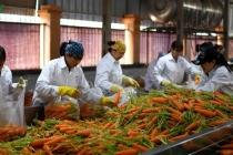 베트남, 코로나19 영향으로 870여개 기업이 활동 중단 및 축소
