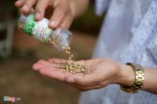 베트남, 최고급 명품 유기농 후추.., 1500만동/Kg에 판매