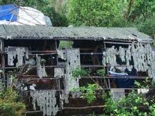 베트남 북부, 뇌우로 5명 사망, 가옥 파손 및 농작물 피해