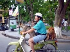 베트남에서는 개도 오토바이를 탄다.